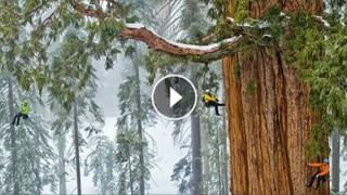 Acest arbore uriaş are 3200 de ani. Până acum nimeni nu a reuşit să fotografieze în întregime!